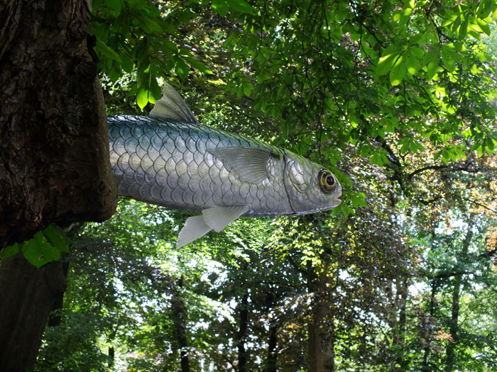 Foto van vis die vanuit boom lijkt te zwemmen
