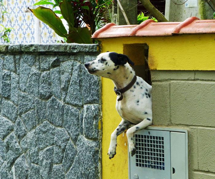 Foto van zwart-witte hond in rechthoekig gat in muur