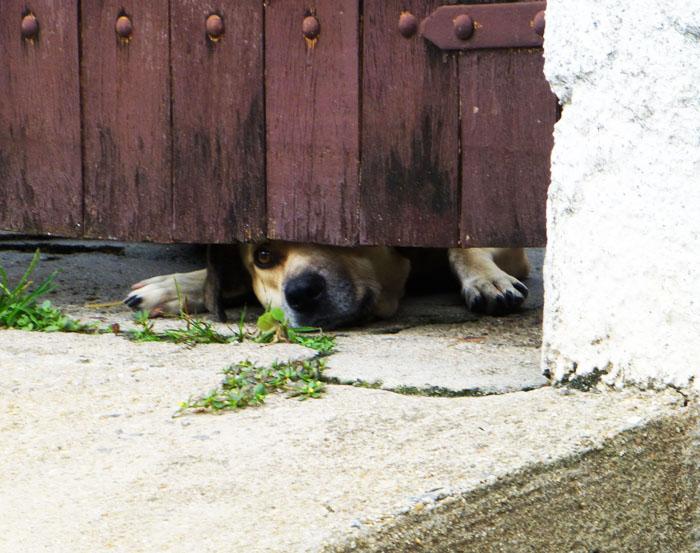 Foto van hond, die uit alle macht onder garagedeur door probeert  te kijken