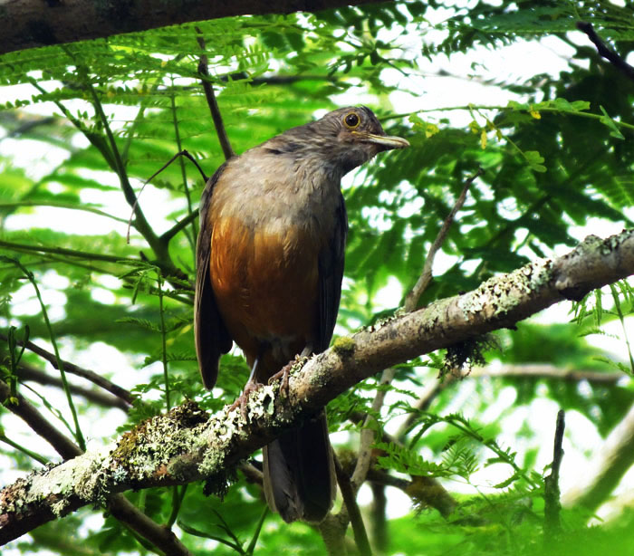 Foto van vogel, die zijn kop scheef houdt