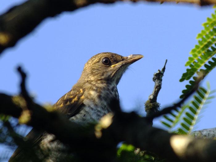 Foto van vogel tussen takken