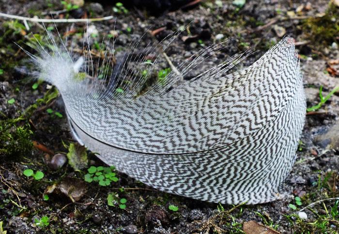 Foto van veertje van vogel op bosgrond