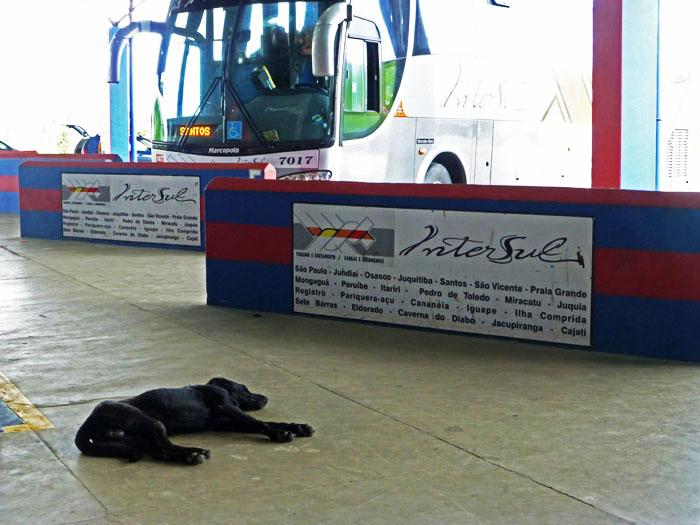 Foto van uitgestrekte hond op busstation