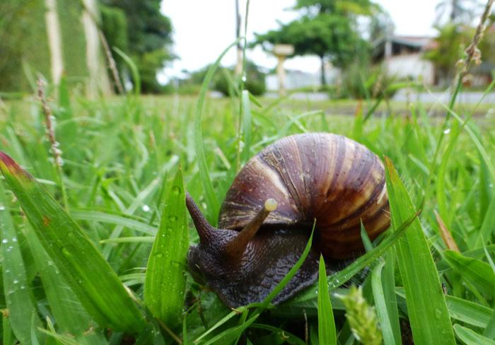 Foto van slak op het gras langs de weg