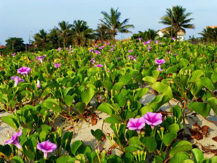 Foto van roze bloemen, palmen op achtergrond
