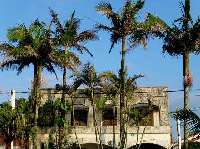 Foto van huis achter palmbomen
