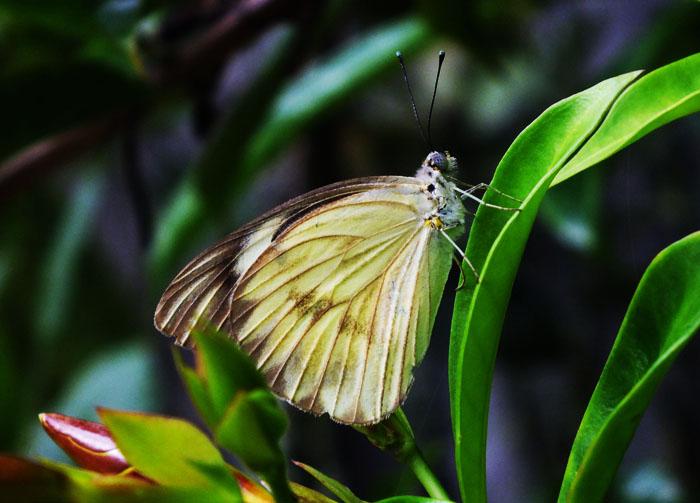Foto van vlinder op groen blad