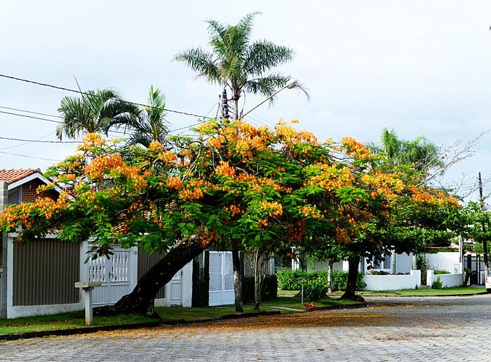 Foto van scheve boom met oranje bloemen