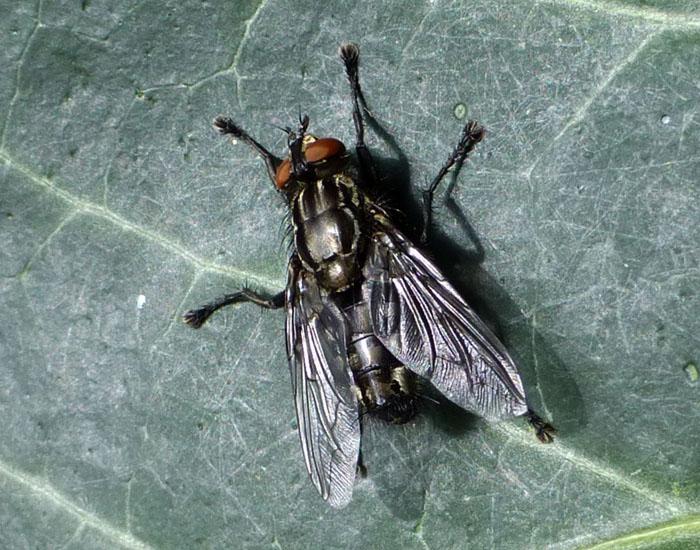 Foto van een vlieg of zo