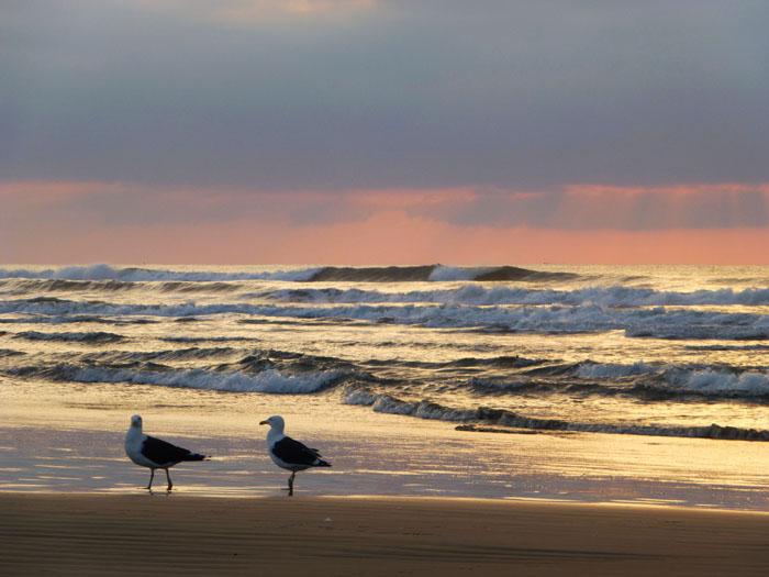 Foto van meeuwen aan het strand bij zonsopgang