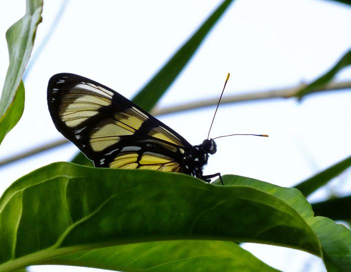 Foto van vlinder op blad