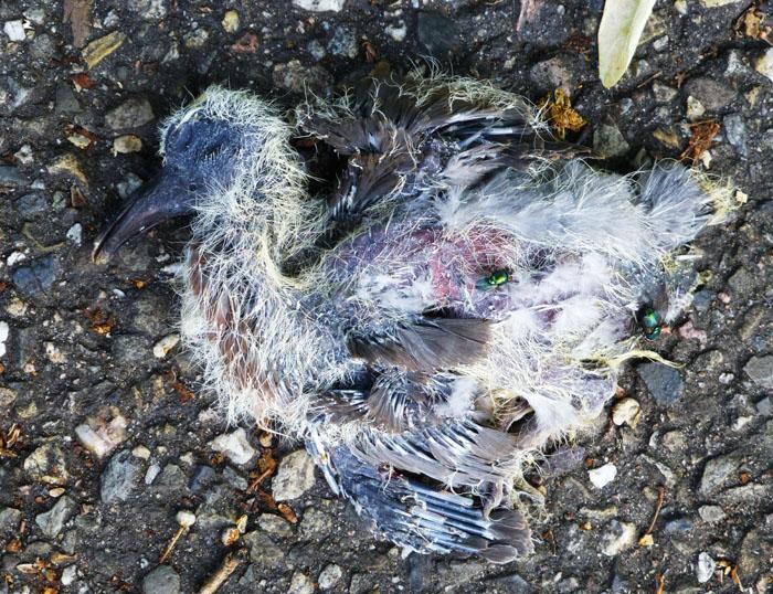 Foto van dode jonge vogel