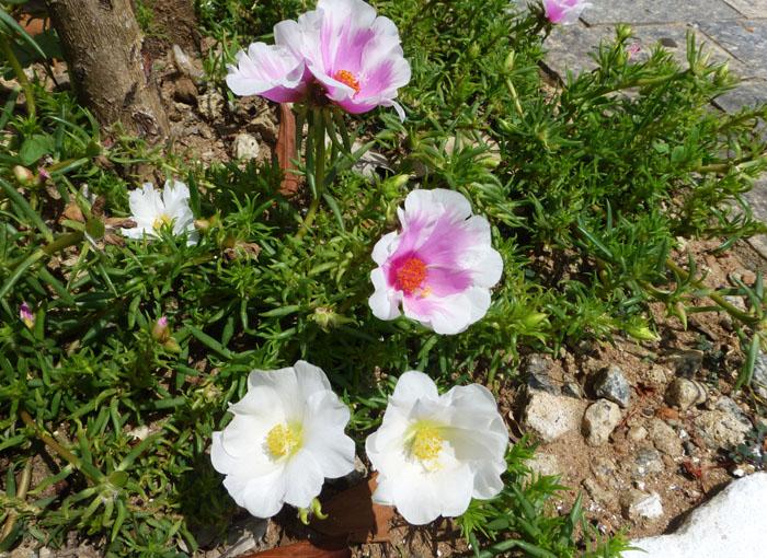Foto van bloemen aan de straatkant