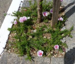 Foto van bloemen langs de straat