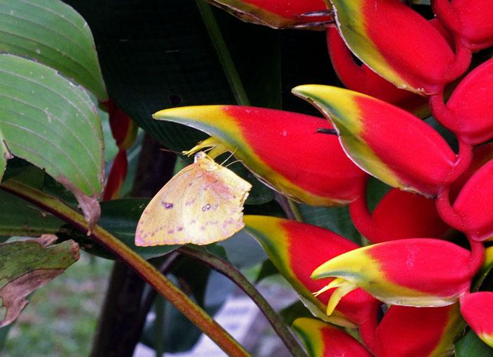 Foto van vlinder op roodgele bloem