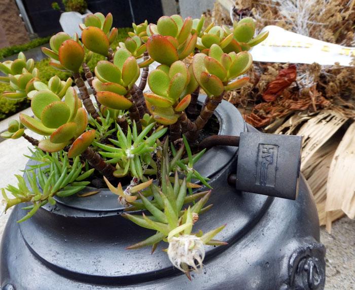 Foto van hangslot aan pot met vetplantjes