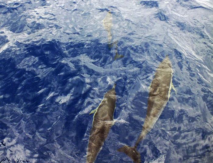 Foto van dolfijnen onder water