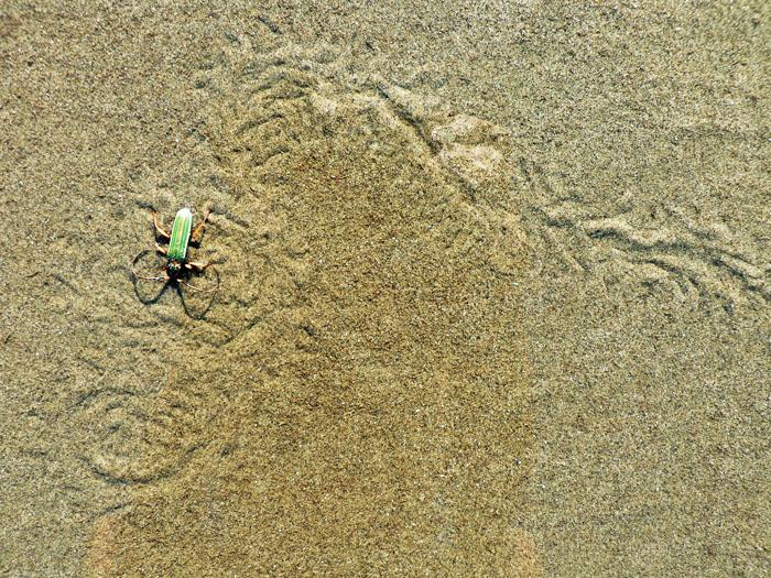 Foto van spoor in zand en groen insect