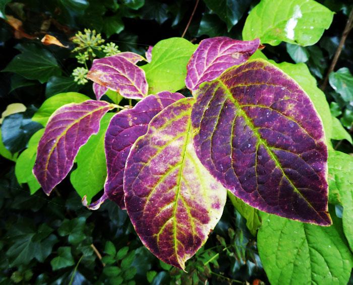 Foto van verkleurende bladeren