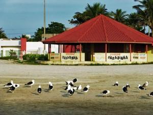 Foto van meeuwen voor strandtent