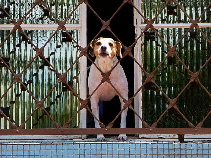 Foto van hond in raam achter tralies