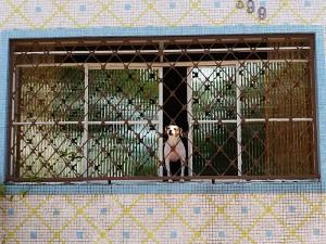 Foto van raam met tralies en hond