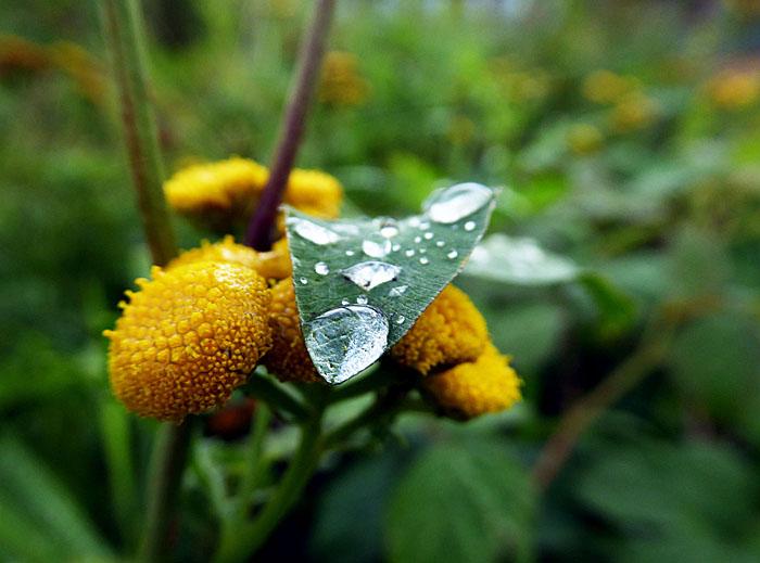 Foto van druppel op groen blad en gele bloemen
