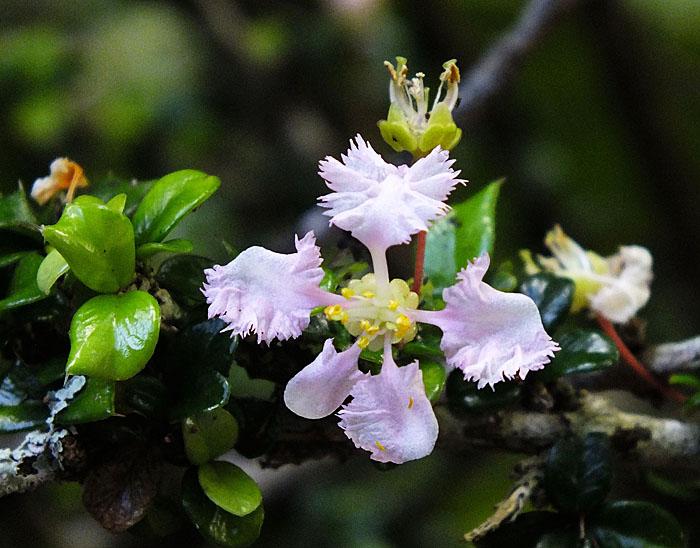 Foto van klein bloemetje