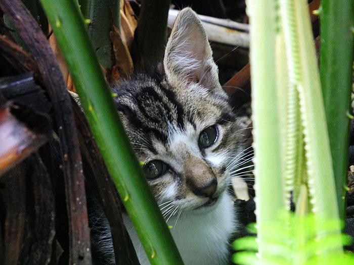 Foto van jonge kat tussen planten