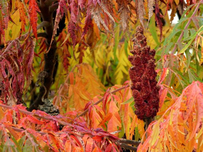 Foto van overwegend rode herfstbladen