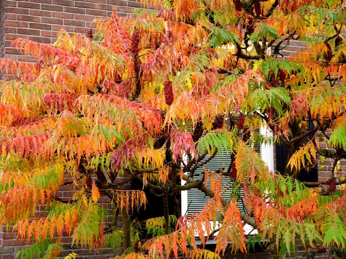 Foto van weelderige herfstkleuren