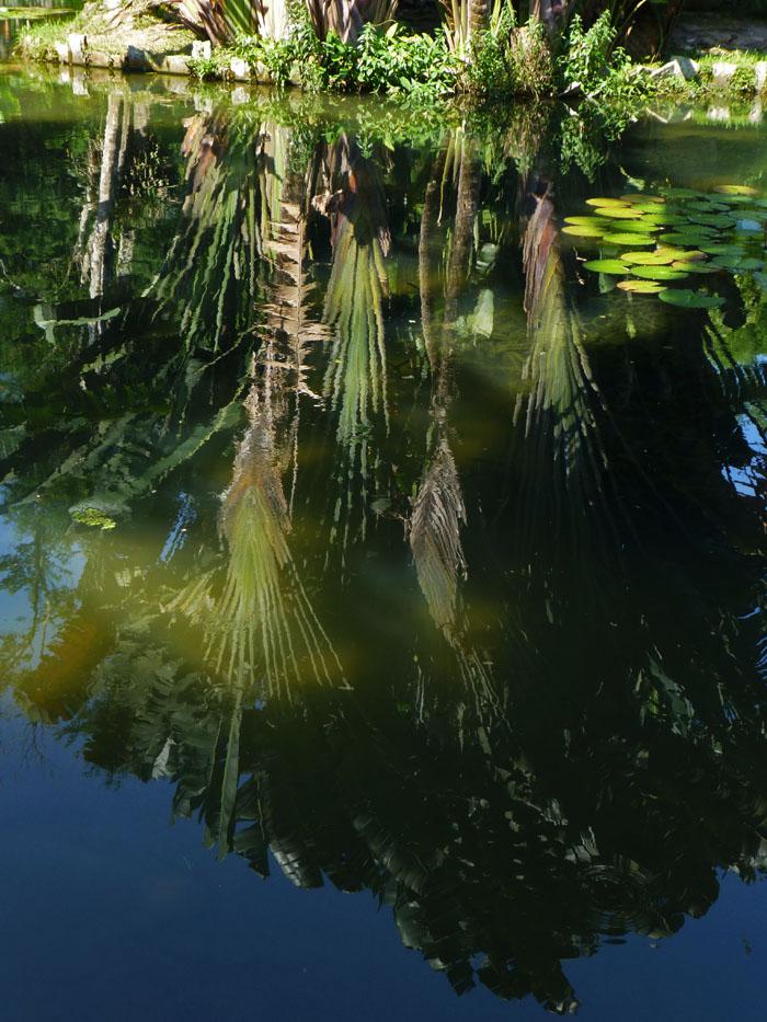 Foto van reflecties van weelderige planten in water