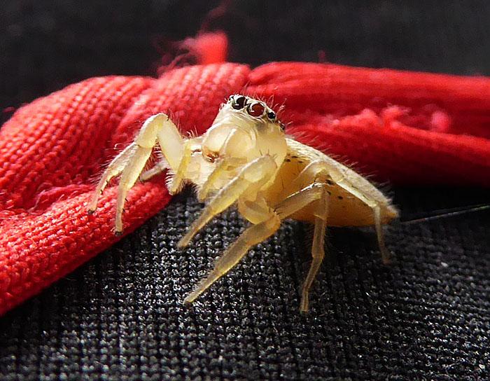 Foto van klein spinnetje
