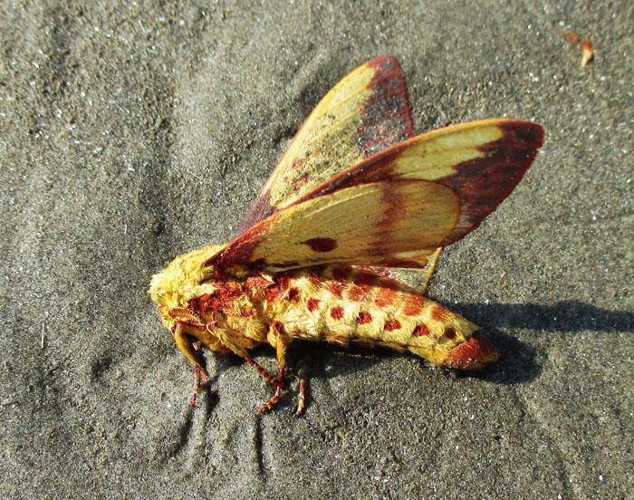 Foto van geel met rood insect op het strand