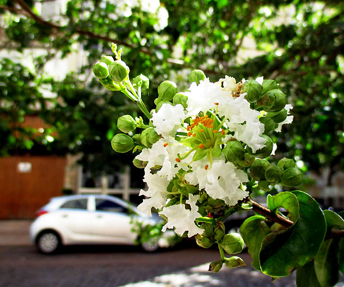 Foto van bloem langs de straat