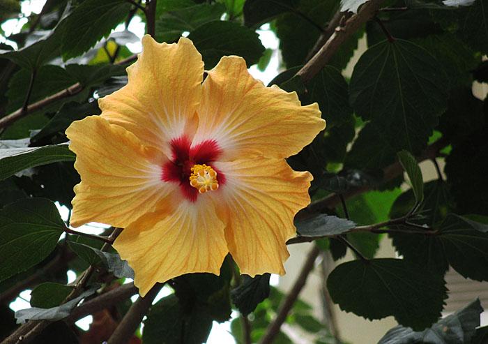 Foto van gele bloem met rood hart