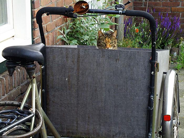Foto van kat in bak van bakfiets