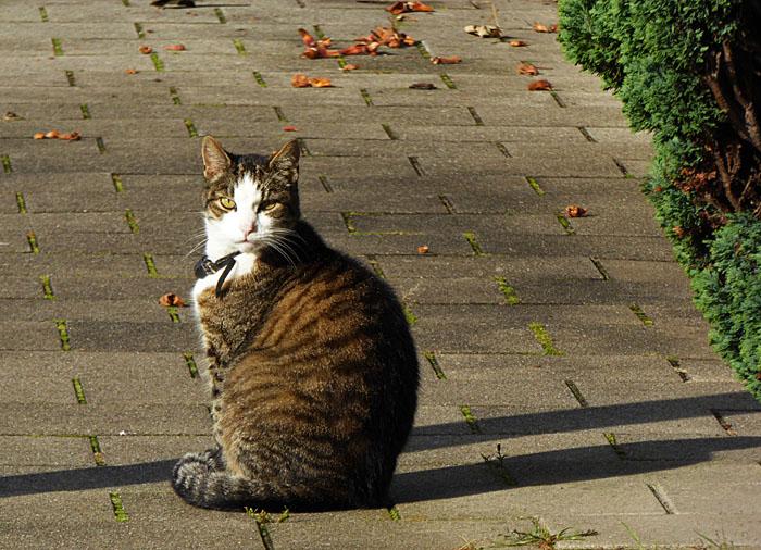 Foto van kat op trottoir