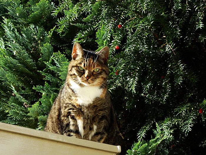 Foto van kat op schuurdak