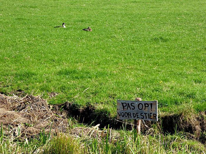 Foto van weiland met eenden en waarschuwingsbord
