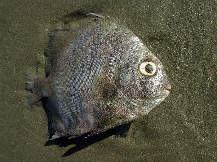 Foto van dood visje op strand
