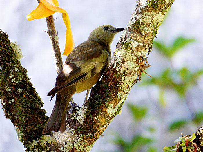 Foto van bruingele vogel