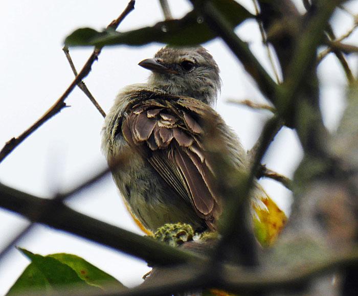 Foto van buingrijze vogel