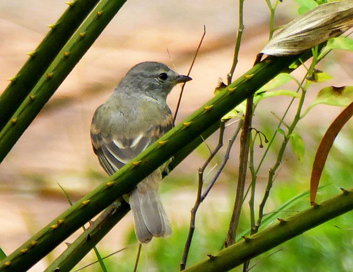 Foto van grijze vogel