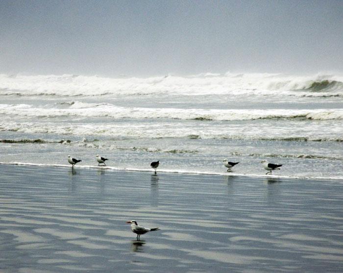 Foto van vogels aan de vloedlijn