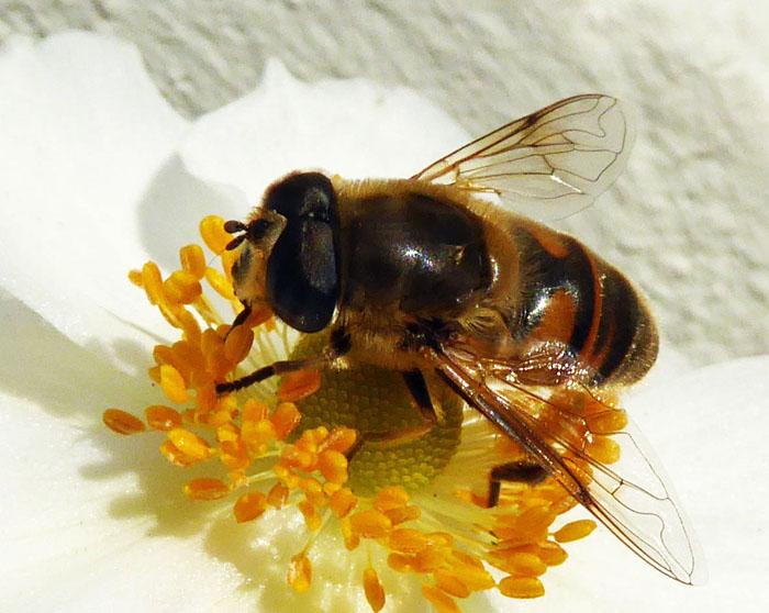 Foto van bij op geel bloemenhart