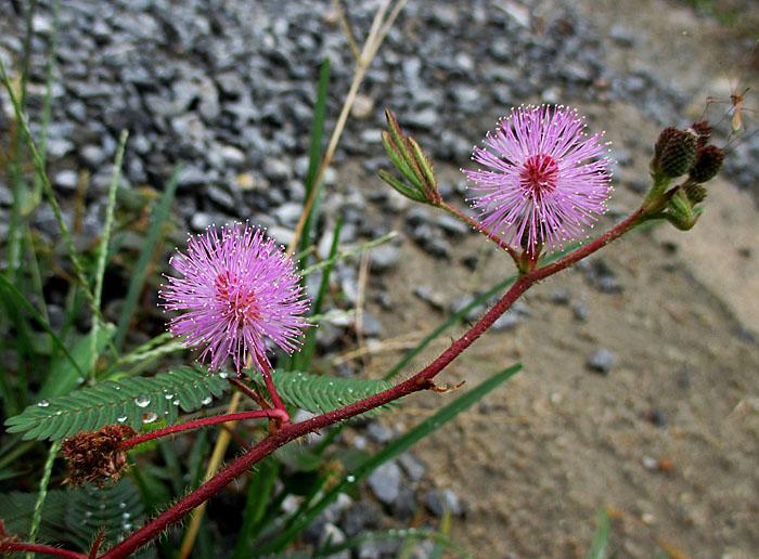 Foto van roze, pluzige bloemen