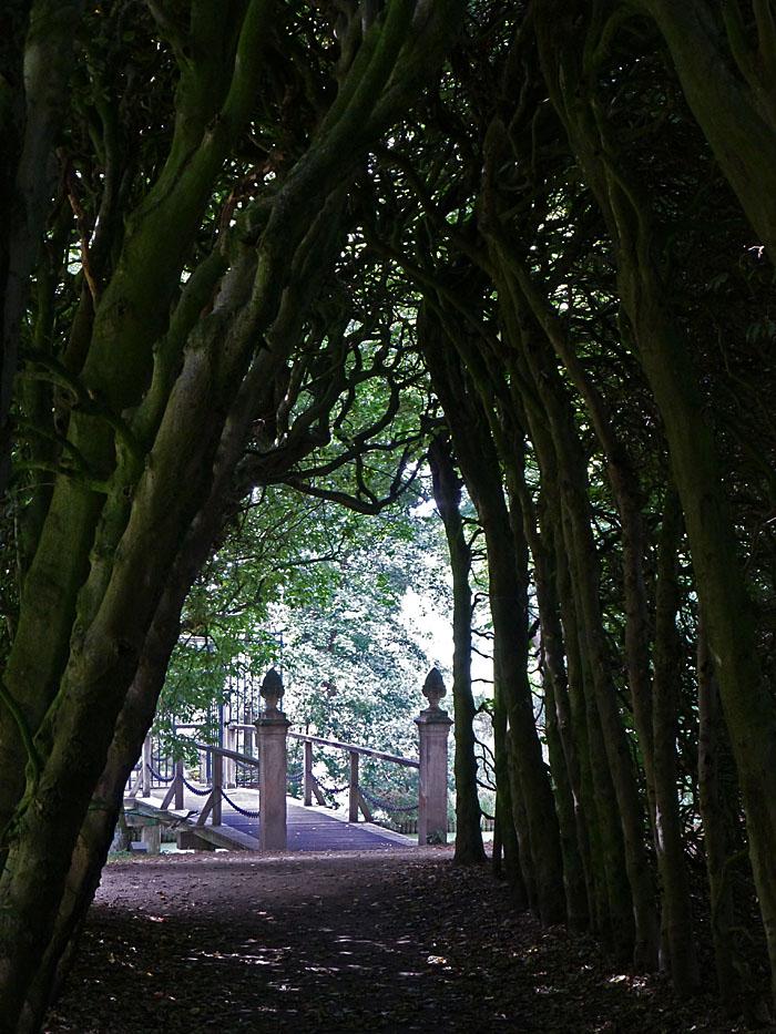 Foto van bruggetje gezien tussen twee rijden bomen