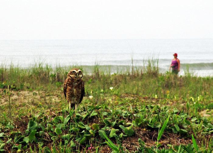 Foto van uil en strandwandelaar