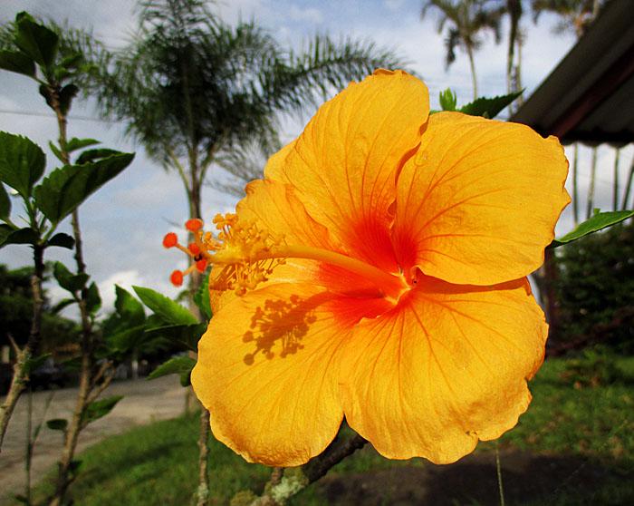 Foto van geel-oranje bloem met bomen op achtergrond